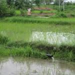 narmdawater   saurashtra farm   election   government