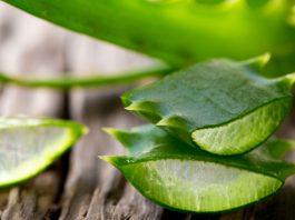 Aloe-Vera- | beauty tips | life style